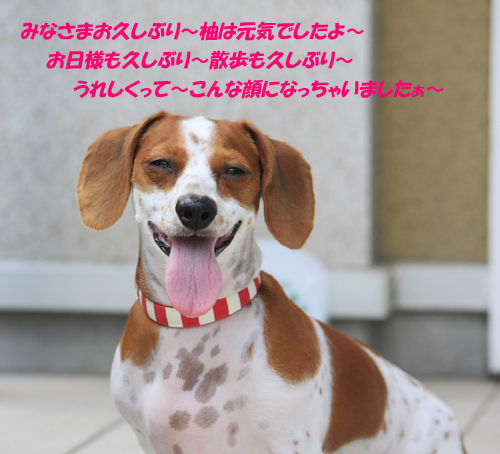 柚828_03.JPG
