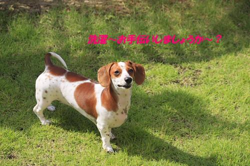 柚828_12.JPG