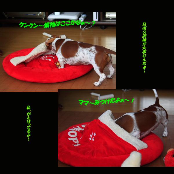柚926猟犬2.jpg