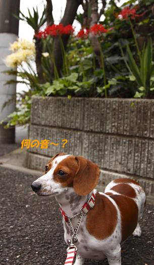 柚928_01.JPG