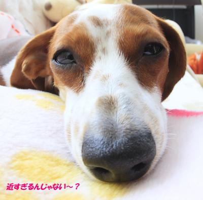 柚鼻デカ01.JPG