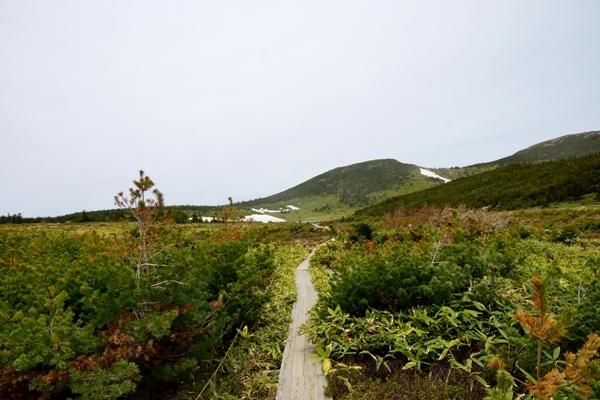 登山道5.JPG