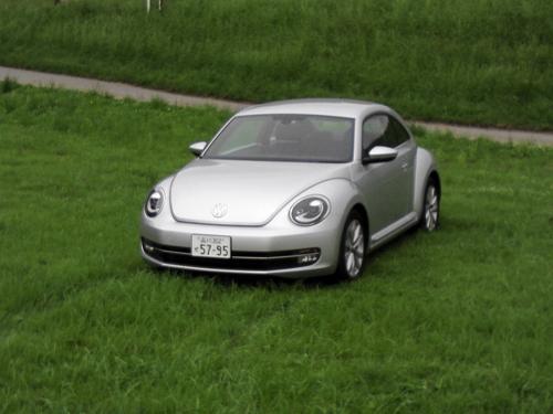 beetle_02.jpg