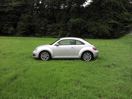 beetle_03.jpg