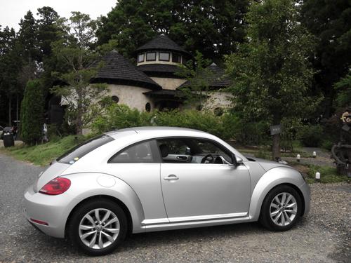 beetle_04.jpg