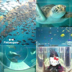 水族館・3.jpg