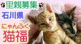 猫福-みんな幸せに!.jpg