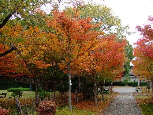 momoji2.jpg