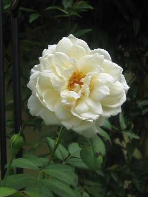 2011.08.04 クレアオースチン.JPG