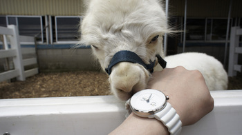 alpaca010.jpg
