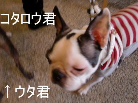 kotarou_1.jpg