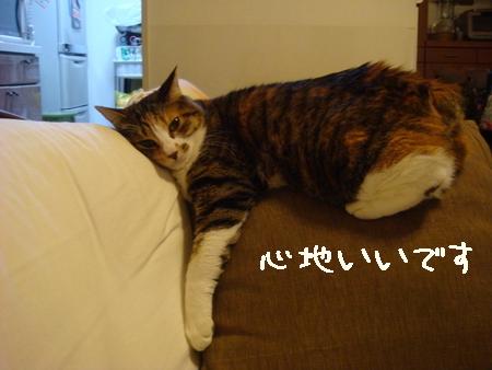 くつろぎ003.jpg