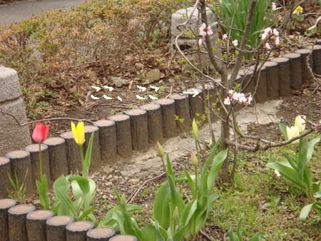 ちび桜1.jpg