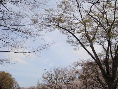 代々木公園002.jpg