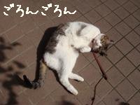 庭遊びみすけ001.jpg