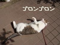 庭遊びみすけ002.jpg