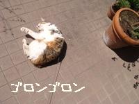 庭遊びよた001.jpg