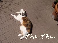 庭遊びよた002.jpg
