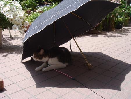 日傘?.jpg