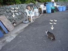 江ノ島015.jpg