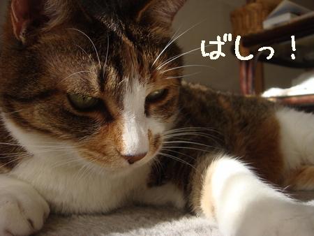 狙う002.jpg