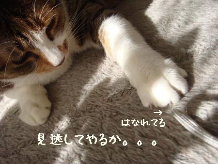 狙う004.jpg