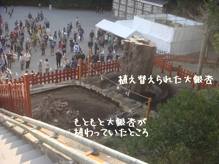 鎌倉桜 鶴八3.jpg
