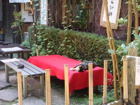 enoshima005.jpg