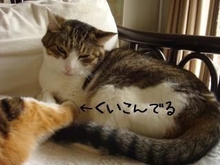 makura002.jpg