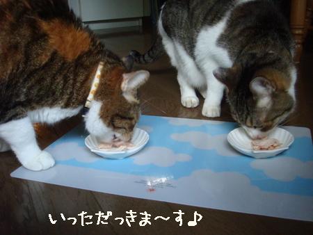 misukeBD001.jpg