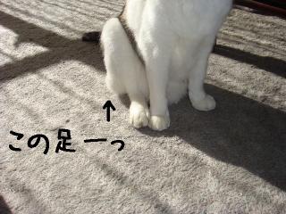 misukeashi003.jpg