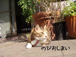 nobiyota003.jpg