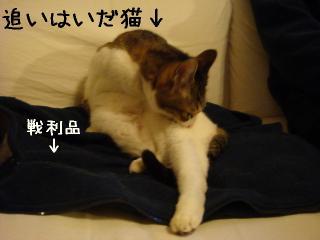 oihagi003.jpg