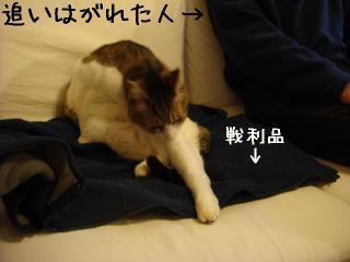 oihagi004.jpg