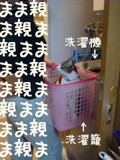 sentakuneko.jpg