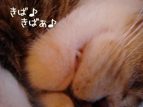 yotanegao003.jpg