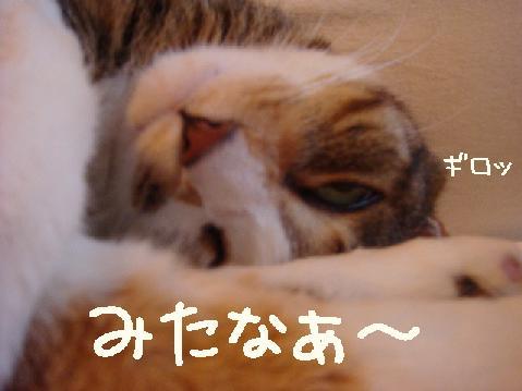 yotanegao004.jpg