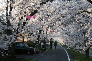 桜のトンネル2.jpg