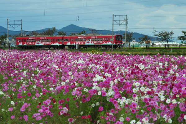 近江鉄道DSC_5709.jpg