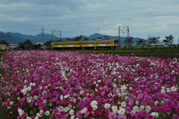 近江鉄道DSC_5745.jpg