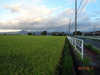 比叡山を見据えた田園風景.jpg