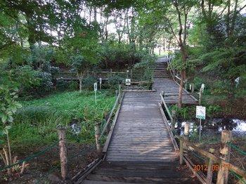 運動公園ほたるの河の橋.jpg