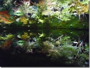 高台寺の臥龍池ライトアップ2