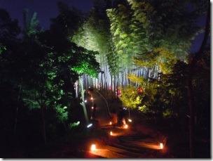 高台寺のライトアップ竹林1