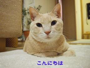 みーたん1.jpg
