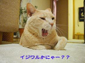 みーたん3.jpg