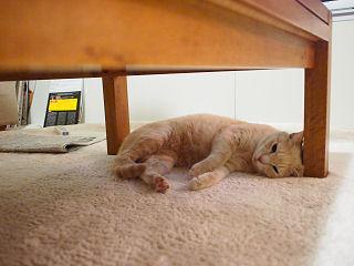 テーブルの下で.jpg