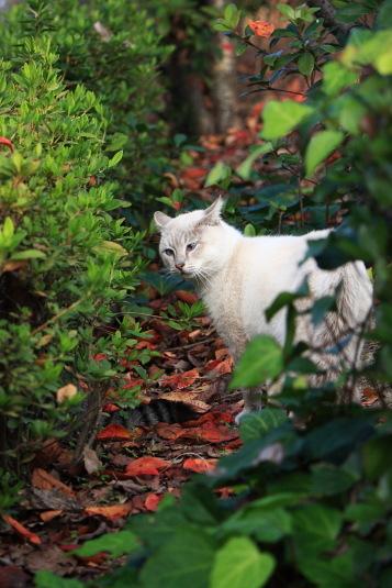 白いネコがいた。よく見るともう1匹の尻尾も見える。
