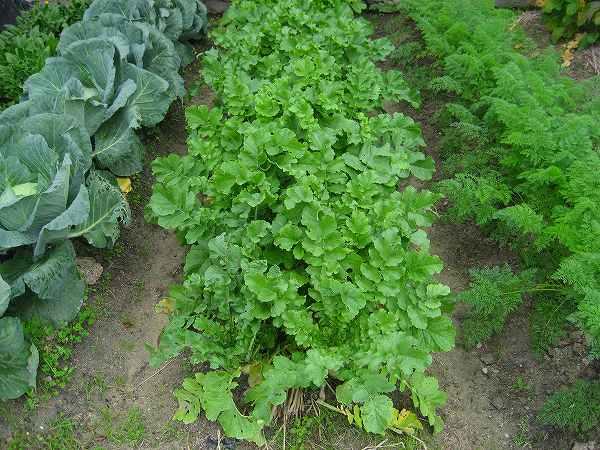1.野菜たち.jpg