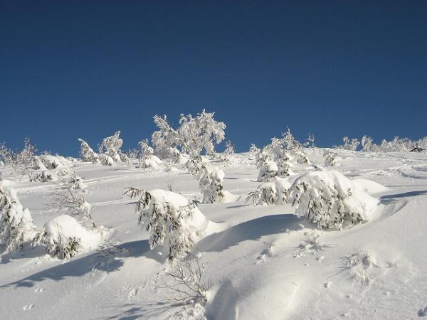 14.樹氷(2).jpg